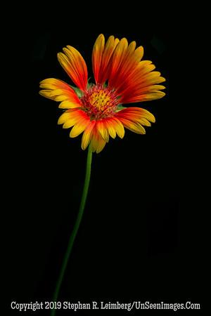 Flower at Jax Arboretum _H1R0295