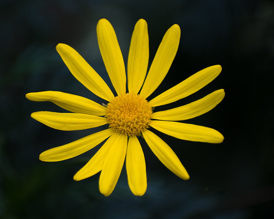 Deep Yellow