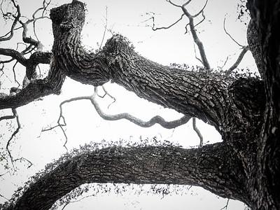 Tree 3 Copyright 2018 Steve Leimberg UnSeenImages Com _DSF4008