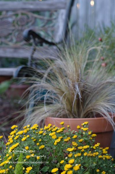 10-01-08 mum grass bench pomegranet garden-20081001