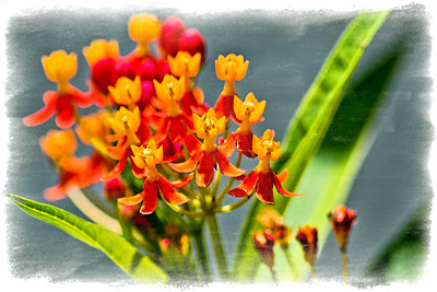 Flowers DSC_5777