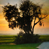 Tree at Sunset - Copyright 2015 Steve Leimberg - UnSeenImages Com _Z2A1634