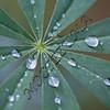 Rain on the trail