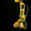 Tulips - Copyright 2015 Steve Leimberg - UnSeenImages Com A8437859