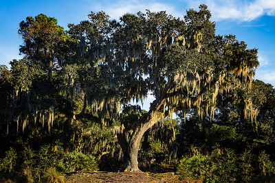 Great Oak at Golden Pond Copyright 2021 Steve Leimberg UnSeenImages Com L1020968