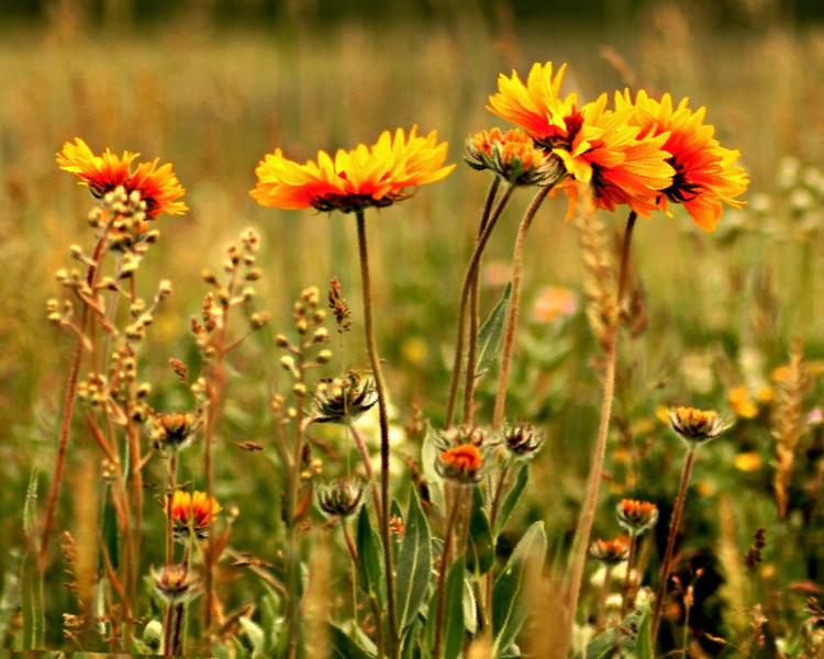 flowers  winnipeg photography, chrismcwilliamsphotography
