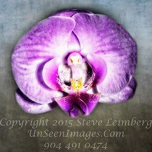 Orchid  - Copyright 2016 Steve Leimberg - UnSeenImages