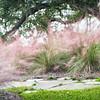 Sweetgrass and Live Oak