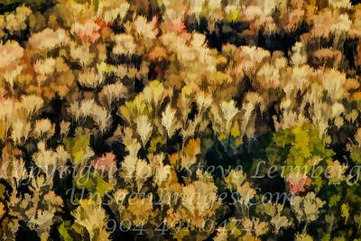 Trees - Copyright 2017 Steve Leimberg - UnSeenImages Com L1010098