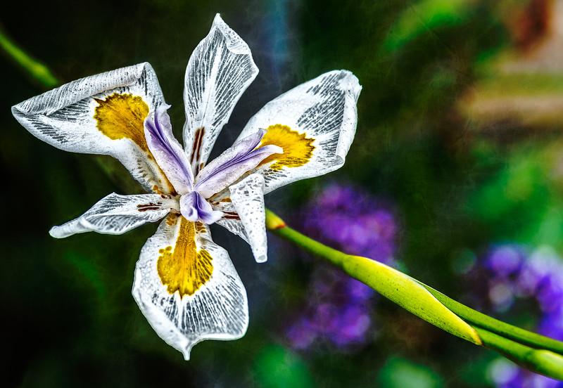 White Flower-7209