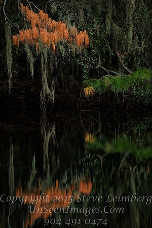 Golden Pond - Dying and Living - Copyright 2016 Steve Leimberg - UnSeenImages Com _A6I5509