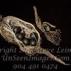 Seed Pod III - Copyright 2015 Steve Leimberg - UnSeenImages Com _H1R5694