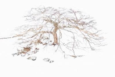 Herbert's Tree - Copyright 2017 Steve Leimberg - UnSeenImages Com L1000973