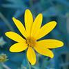 flor amarilla deux