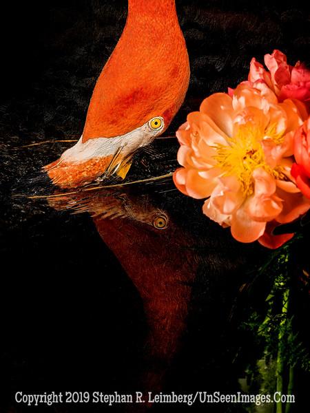 Peonies and Flamingo - Copyright 2015 Steve Leimberg - UnSeenImages Com A8438686
