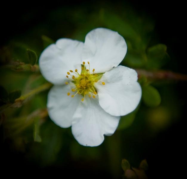 8 10 Flower 1
