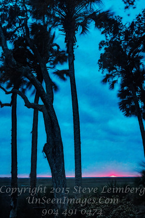 Sunset Through Trees - Copyright 2017 Steve Leimberg - UnSeenImages Com _Z2A4754