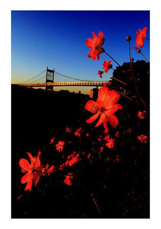 Tri-boro Bridge.  New York City