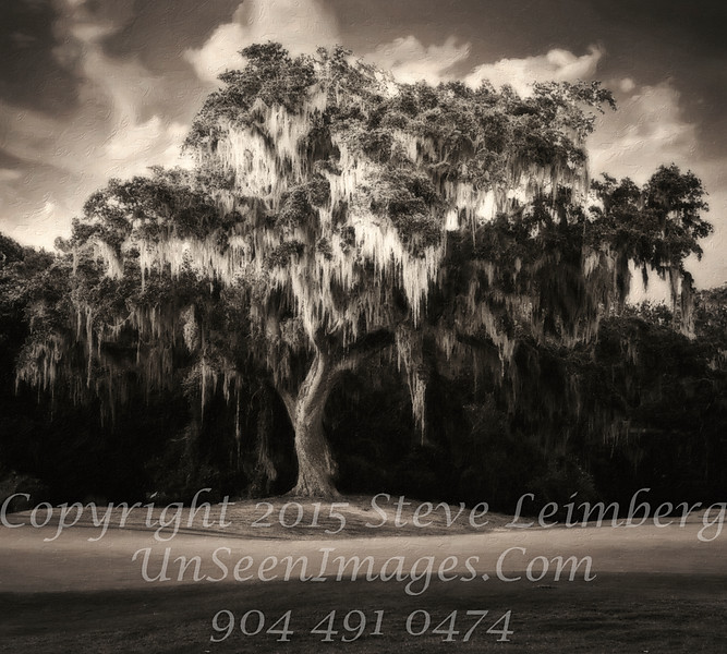 Great Live Oak - B&W Copyright 2016 Steve Leimberg - UnSeenImages Com L1030413_DxO