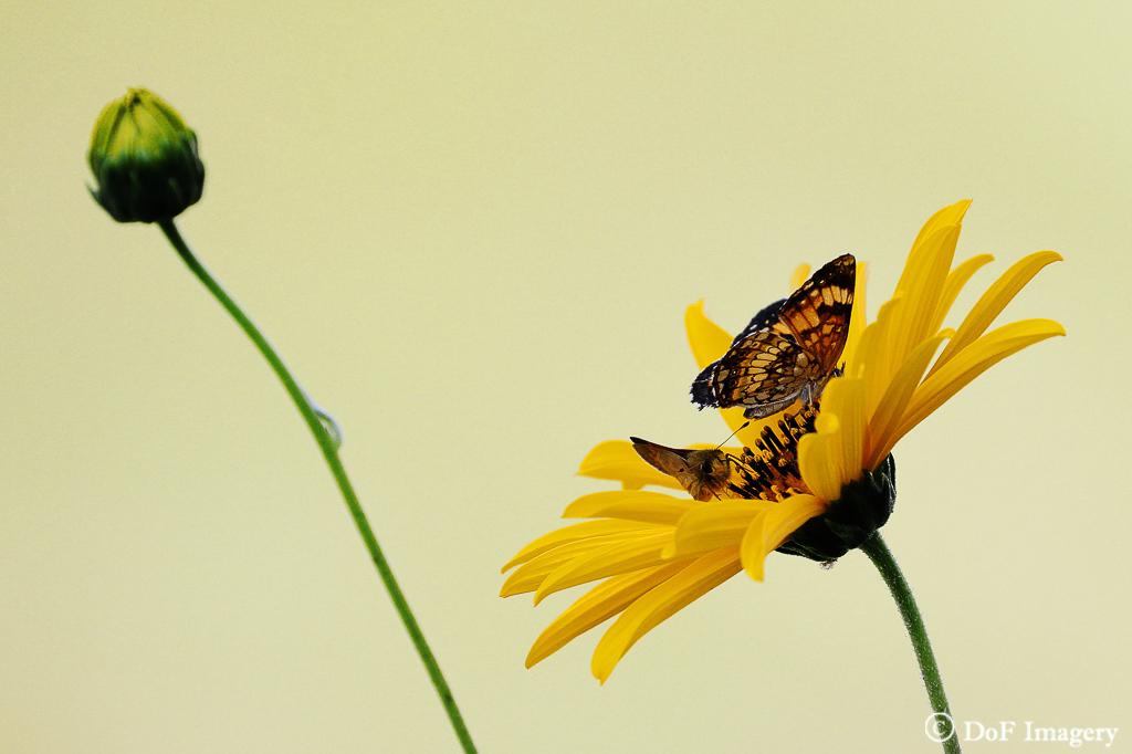 IMAGE: https://photos.smugmug.com/Nature/Flowers/i-t2M4ZS9/0/249a19ab/XL/IMG_1258-XL.jpg