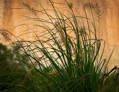 Grass along a wall