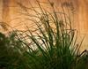 Grass along a wall