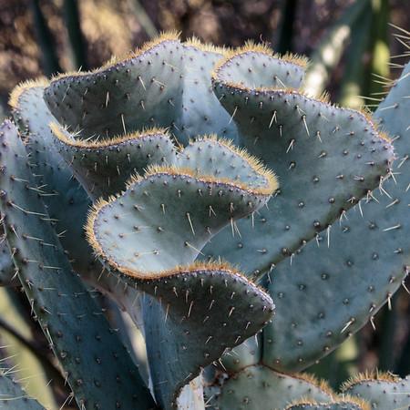 2017-02-04  Cactus