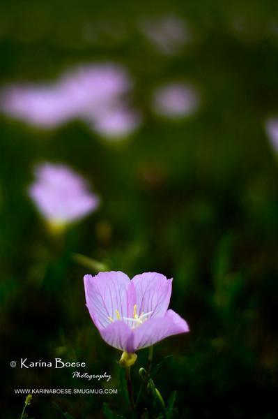 DSC_9851 weeds flower spring 50mm 2010 1