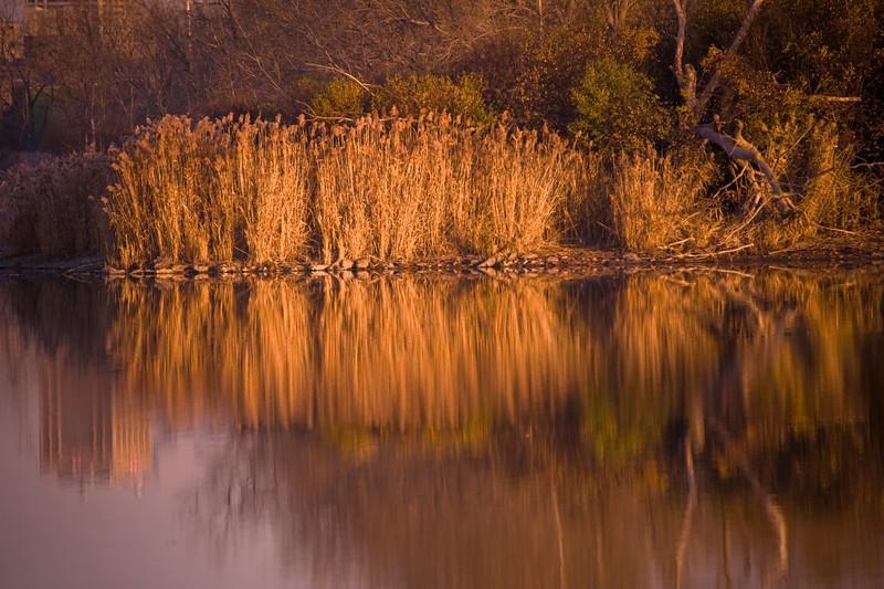 Flora Sunrise 10