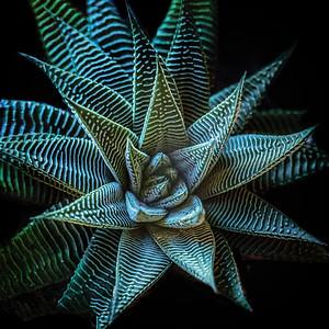 Green Star Copyright 2020 Steve Leimberg UnSeenImages Com L1000339