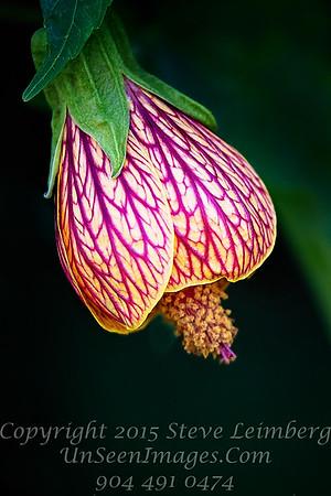 Stunning Flower - Copyright 2016 Steve Leimberg - UnSeenImages Com _Z2A1657