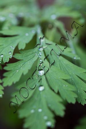 Trail of drops