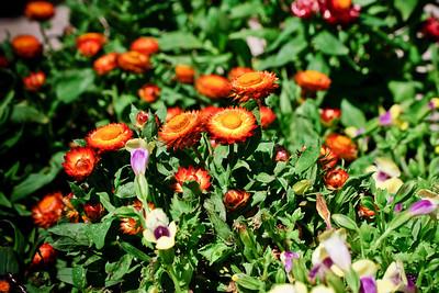 Flowers_DSC1374