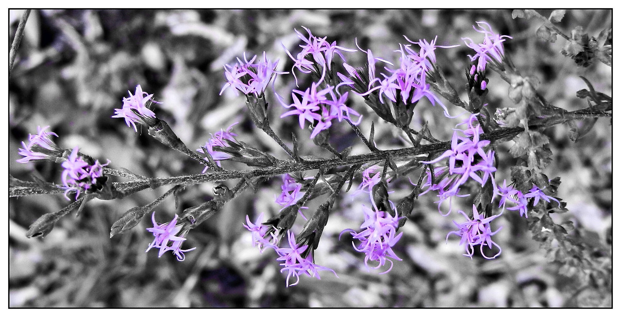 Selective Color. Done in camera.