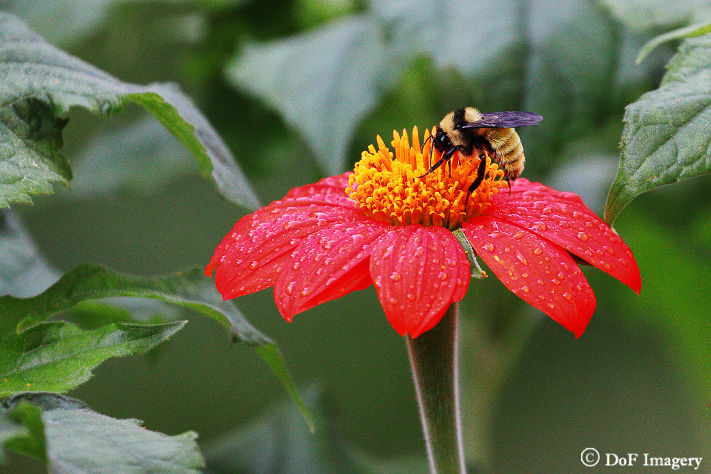 IMAGE: https://photos.smugmug.com/Nature/Flowers/i-vVBb5n8/0/7f7fd087/XL/IMG_1241-XL.jpg
