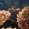 2012_11 Backyard Flora 01