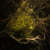 Roots - Okefenokee - Copyright 2015 Steve Leimberg - UnSeenImages Com _M1A6206