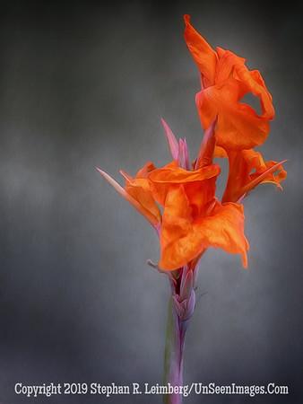 Red Flower San Antonio OIL DSCF1311