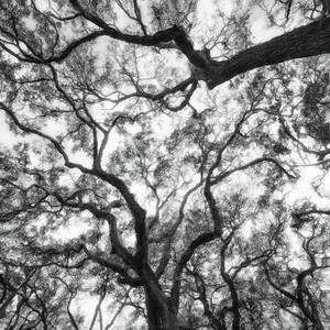 Tree 6 Copyright 2018 Steve Leimberg UnSeenImages Com _DSF4124