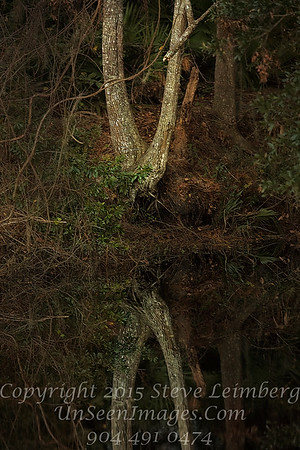 Double Tree at Golden Pond - Copyright 2016 Steve Leimberg - UnSeenImages Com _Z2A0766