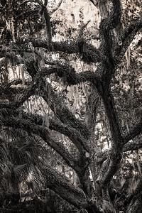 Trees  Copyright 2020 Steve Leimberg UnSeenImages Com L1000036