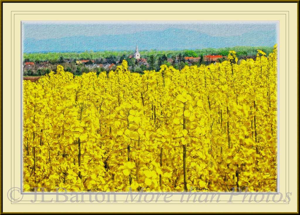 Drösing An Austrian town on the March/Morava River, with Canola growing on the rise above the town. The town has about 550 households with a population of roughly 1,200, it was founded in 1293.  The hills in the background are Slovakian.  About 35,000 hectare are planted with Canola in Austria, mainly for bio-diesel and for food oil.