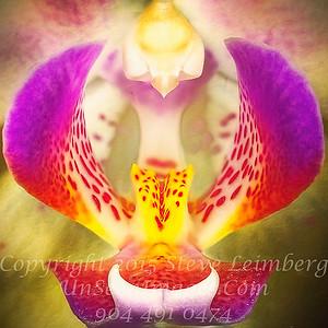 Orchid - Copyright 2016 Steve Leimberg - UnSeenImages Com 2016-12-20 09-25-26 (C)