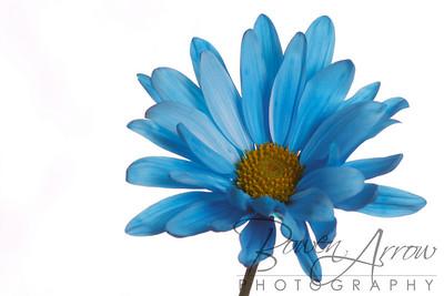 Flowers-159