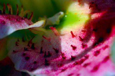 Lily landscape
