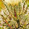 Thistle White Oak  - Copyright 2017 Steve Leimberg - UnSeenImages Com _Z2A7915