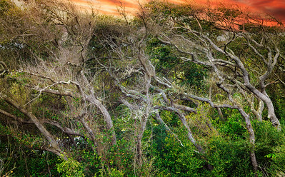Trees at Little Nana Dune  American Beach Copyright 2021 Steve Leimberg UnSeenImages Com L1000625