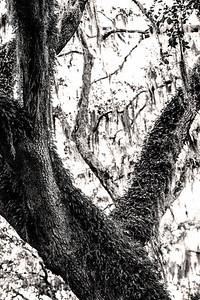 Trees Copyright 2020 Steve Leimberg UnSeenImages Com L1000039