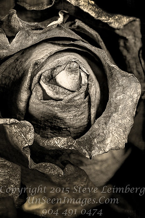 Wilted Flowers B&W Copyright 2016 Steve Leimberg - UnSeenImages Com 2016-12-13 15-51-16 (C)