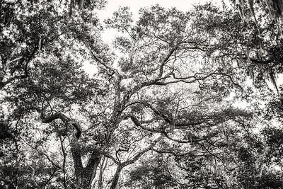 Trees Copyright 2021 Steve Leimberg UnSeenImages Com  L1001173